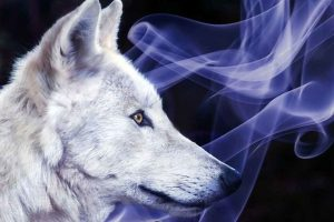 Animalul totem- ghidul tău spiritual